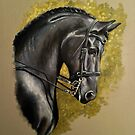 Friesian Study by Stephanie Greaves