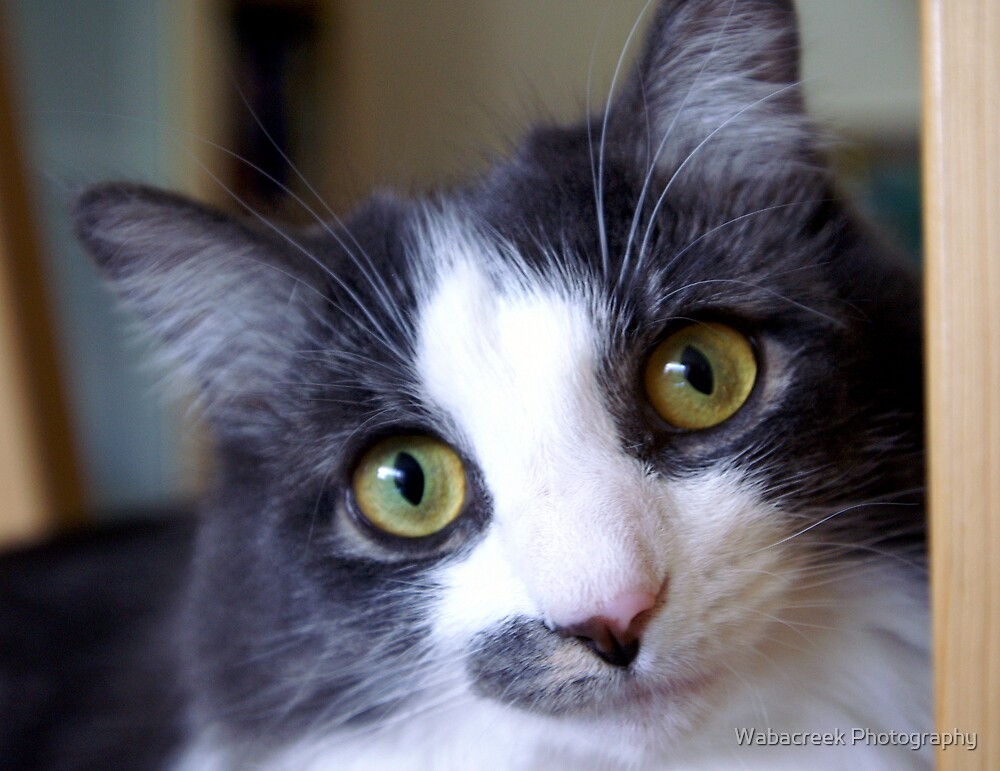Cat by Jocelyne Phillips
