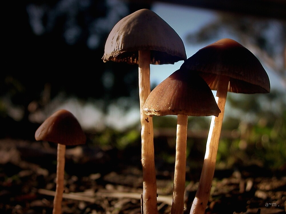 ~Little Mushies~ by a~m .