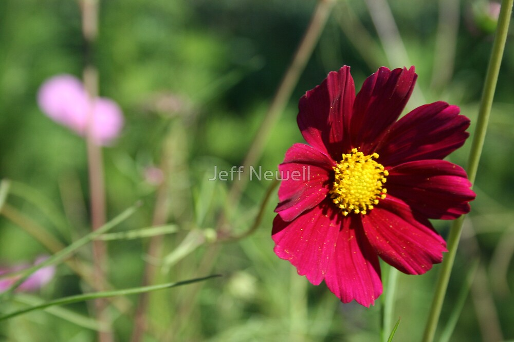 A Beautiful Day by Jeff Newell