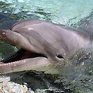 Delightful Dolphins! by Kristin Hamm