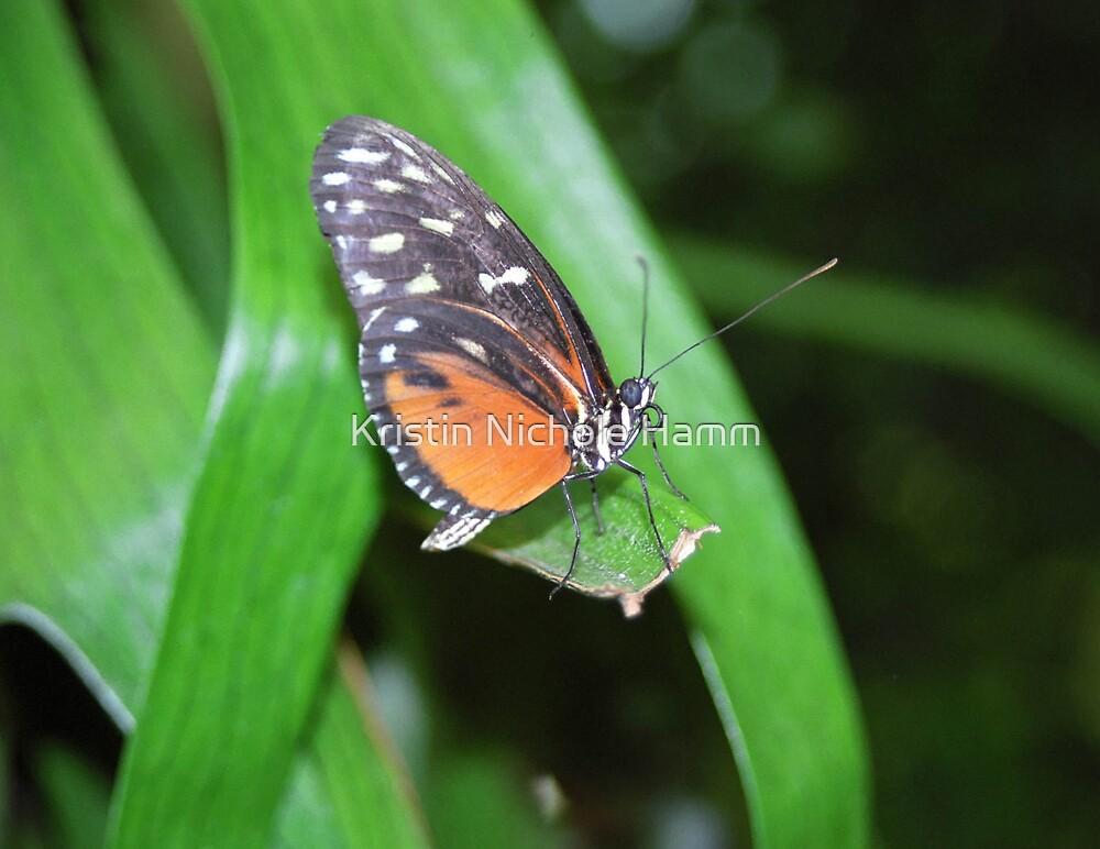 Butterfly by Kristin Hamm