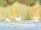 American White Pelican by Diane Hall