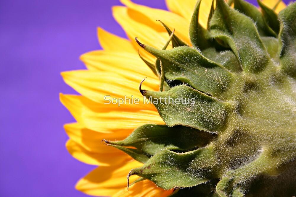 Sun Fan by Sophie Matthews