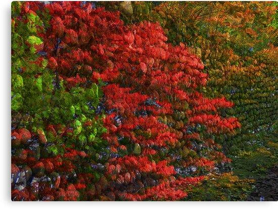 Autumn Wall by Mistyarts
