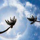Aruba Halo by John Velocci
