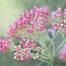 Reis-Blumentapisserie von Celeste Mookherjee