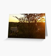 Goats Greeting Card