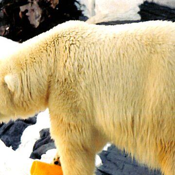 Polar Bear by tkrosevear