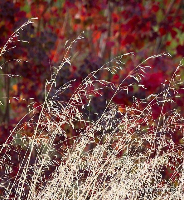 Grasses in autumn by Lynn Starner