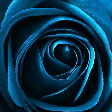 turqoise rose by crasher59
