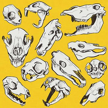 skull party by reedbuck