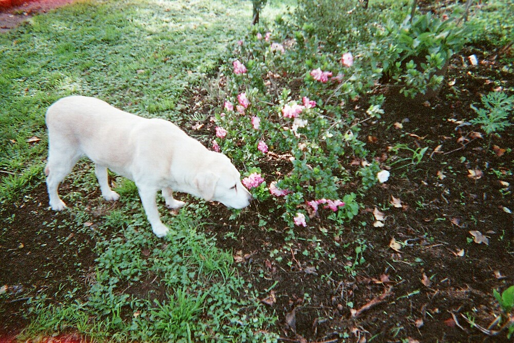 Always stop to smell the flowers by tesdin
