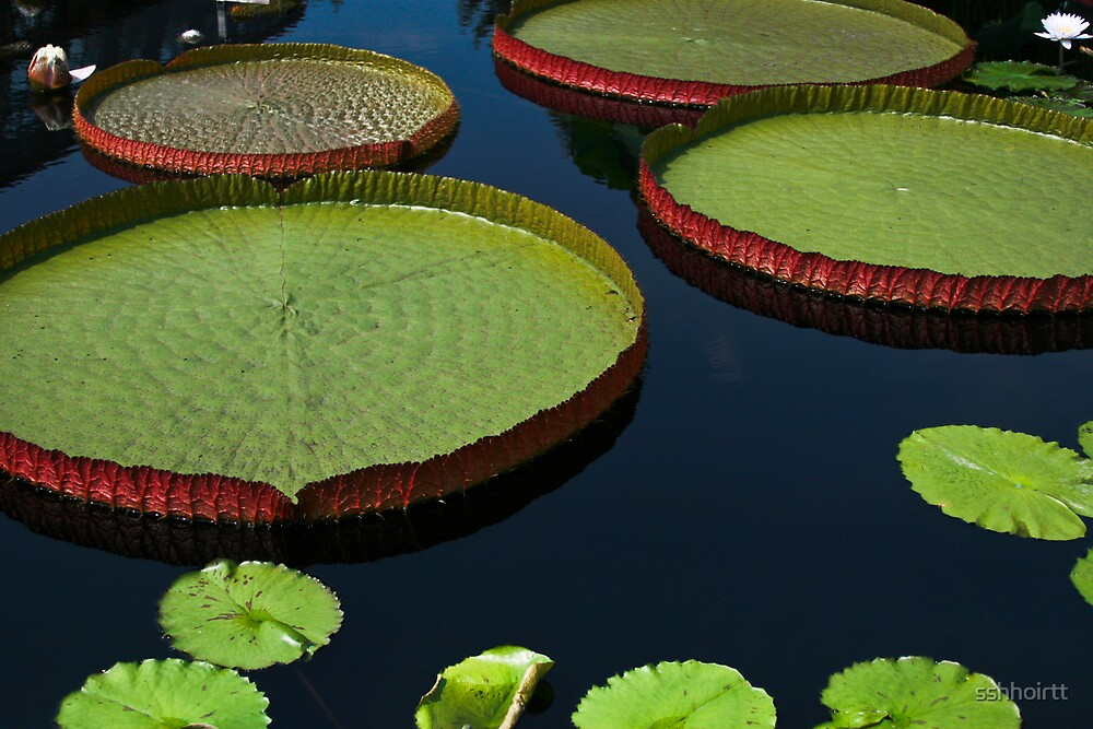 Large Lilly Pads by sshhoirtt