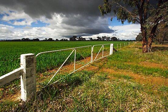 Farmland at Wangaratta by Darren Stones