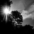 """ Sunburst Noir "" by Richard Couchman"