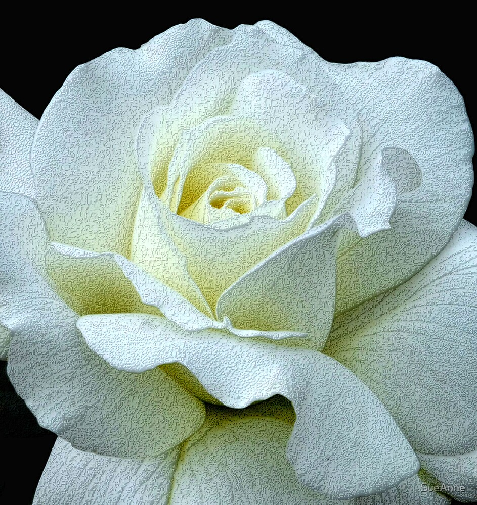 White Rose by SueAnne