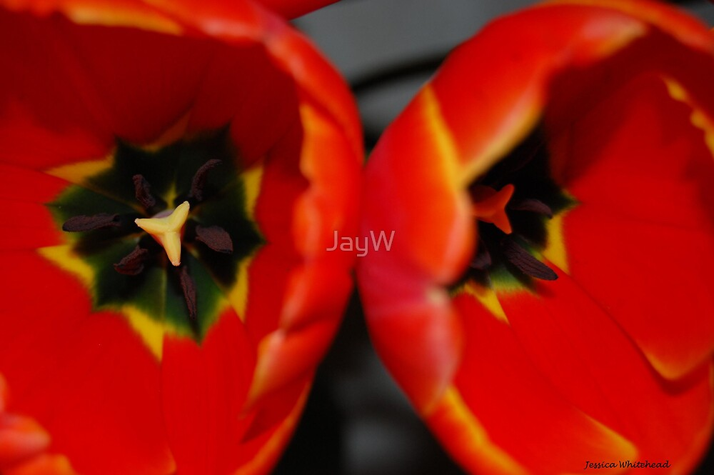 Tulips 0.2 by JayW