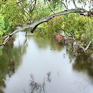 Raining On The Murrumbidgee River  by Ronald Rockman
