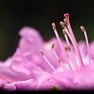 In Bloom 2907 by Zohar Lindenbaum