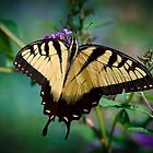 Eastern Swallowtail Butterfly Taken in Murrells Inlet, South Carolina, United States  by TJ Baccari Photography