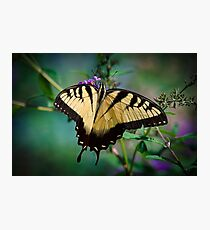 Eastern Swallowtail Butterfly Taken in Murrells Inlet, South Carolina, United States  Photographic Print