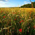 Poppies at Longbridge Deverill, Wiltshire by Victoria Ashman