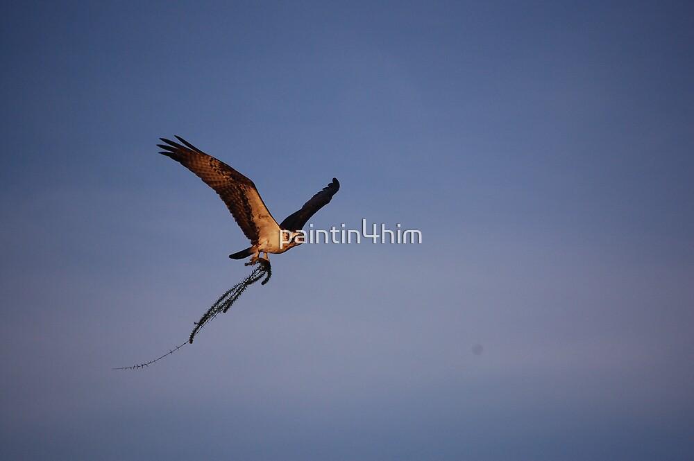 osprey by paintin4him