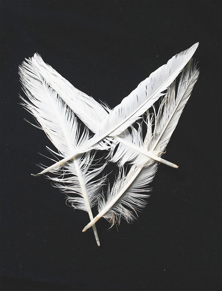 Feather heart by Amanda Gazidis