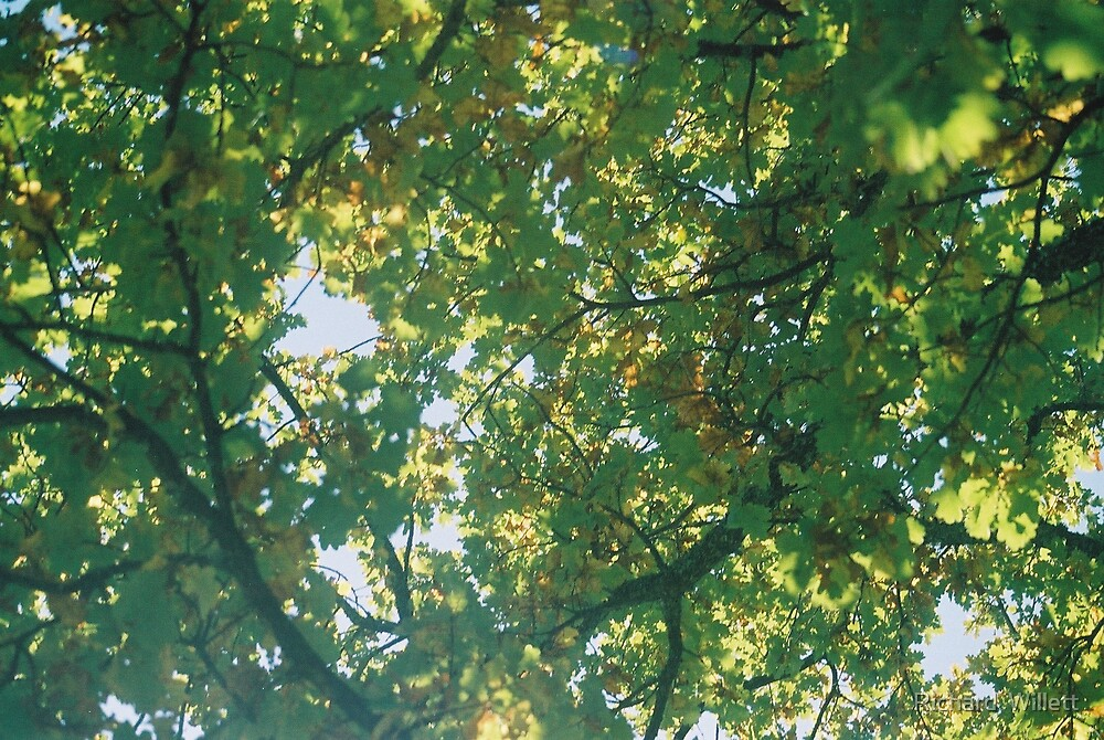 Look Up! by Richard  Willett