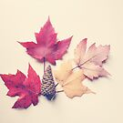 Autumn Leaves Still Life by OLIVIA JOY STCLAIRE