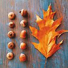 Autumn Oak Leaf and Acorns by OLIVIA JOY STCLAIRE