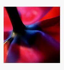 VI Square Photographic Print