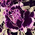 boho chic feminine botanical watercolor floral purple peony by lfang77