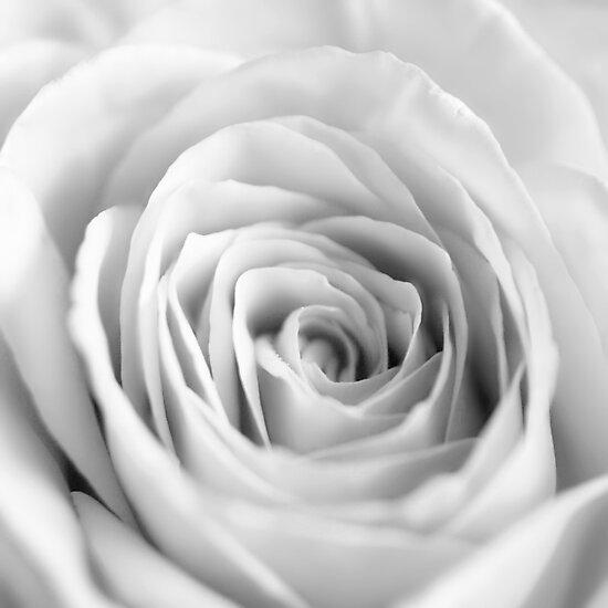 White I by Damienne Bingham