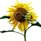 Sunflower And Baby by Susan Savad