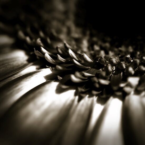 Life Is In The Details IX by Damienne Bingham