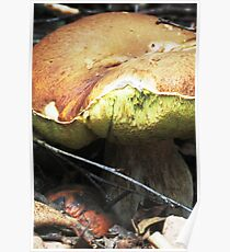 Apple and Boletus Poster