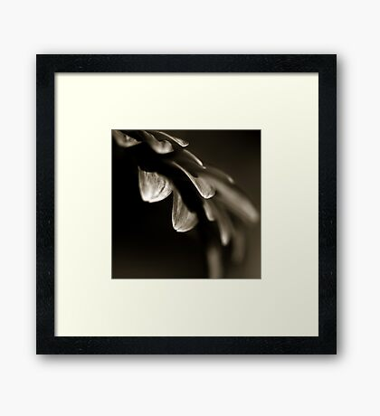 Life Is In The Details X Framed Print