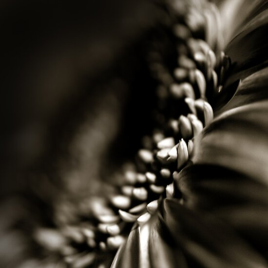 Life Is In The Details XI by Damienne Bingham