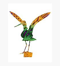 Colourful Godwit Photographic Print