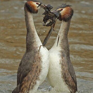Penguin Dance by Hawker
