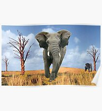 Elephant Charging Poster