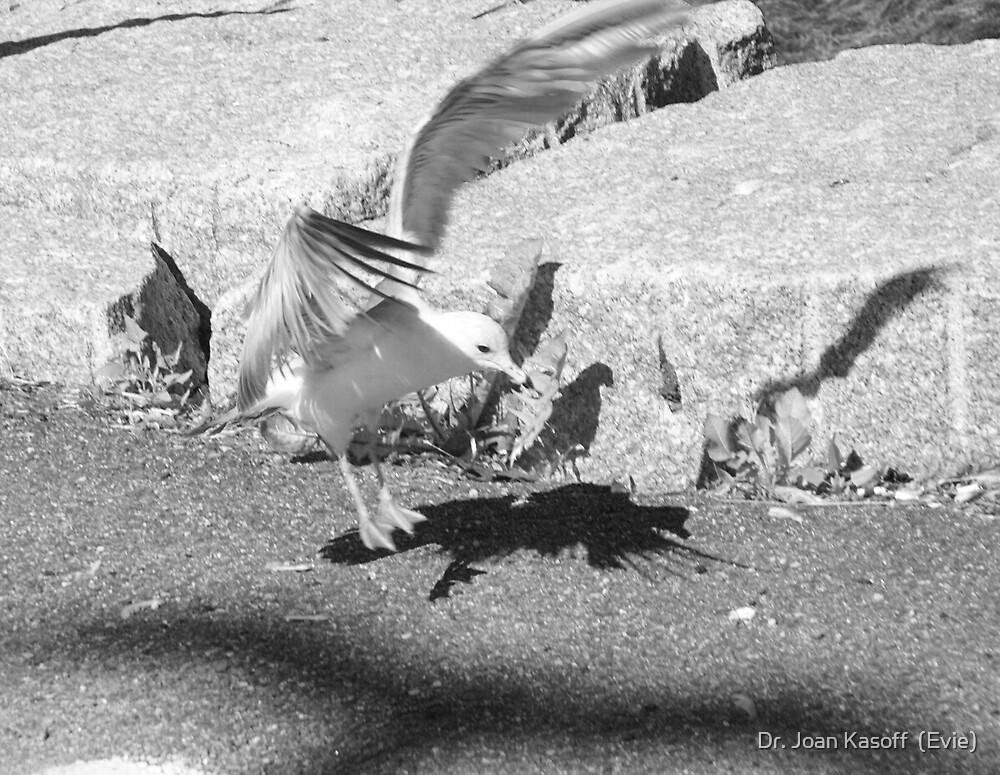 Shadow Dance by Dr. Joan Kasoff  (Evie)
