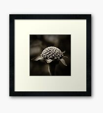 Life Is In The Details III Framed Print