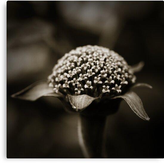 Life Is In The Details III by Damienne Bingham