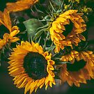 Sunflowers by Marie Carr