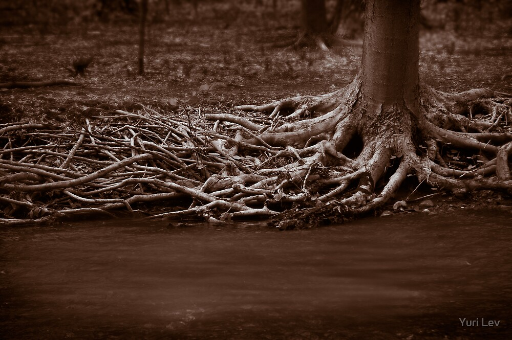 Roots by Yuri Lev