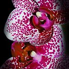 Spots of Beauty by Catherine Crimmins