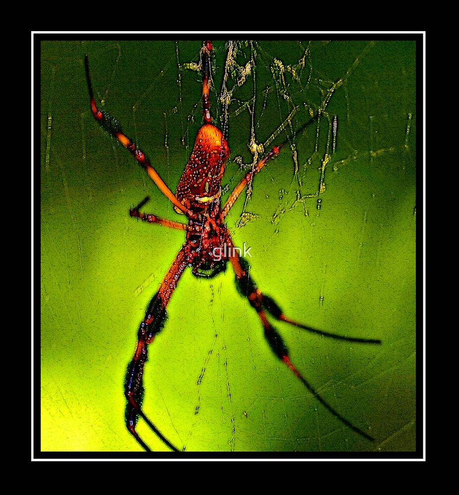 Creepy Spider by glink